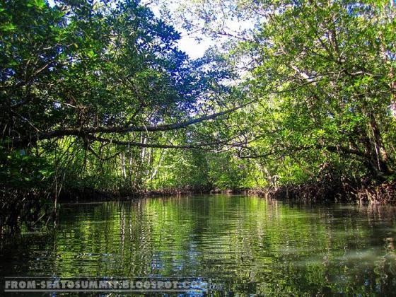Mangrove Paddle boat tour in Sabang, Palawan