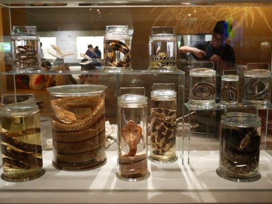 Lee-Kong-Chian-Natural-History-Museum-11