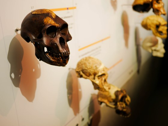 Lee-Kong-Chian-Natural-History-Museum-8
